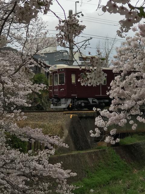 桜 阪急.png